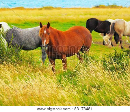 Gray, bay and black horses grazing in the meadow. National Park Torres del Paine, Chile