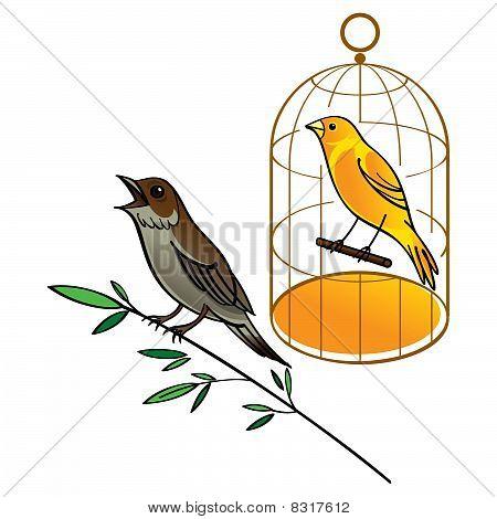 Nightingale und Kanarischen