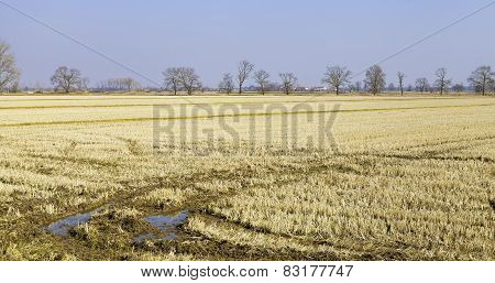 Lomellina countryside, winter panorama. Color photo