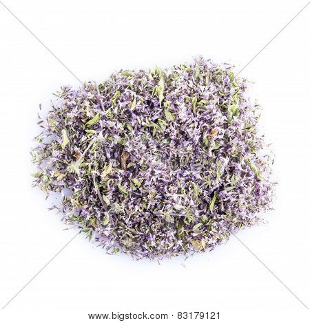Pennyroyal Isolated On A White Background