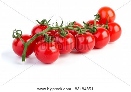 Branch Of Ripe Cherry Tomatoes