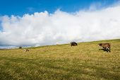 stock photo of dike  - Brown white and spotted sheep grazing on a Dutch dike on a sunny day in winter - JPG