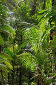 picture of rainforest  - Tropical rainforest with plants in the forest - JPG