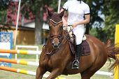 pic of girth  - Brown horse portrait during competition in summer