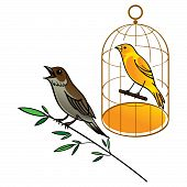 stock photo of nightingale  - Birds Nightingale and yellow Canary in golden cage - JPG