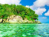 foto of jungle  - Jungle Dream Palms  - JPG