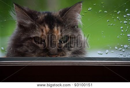 Cat Peering Through Glass Door