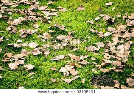 Dried Leaves On The Grass