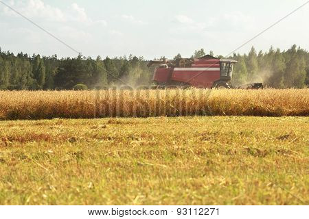 Combine Machine Working In Grain Summer Field