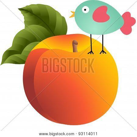 Bird on peach