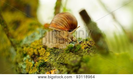 Big snail on the tree