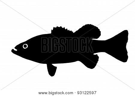 Silhouette Of The Fish Bass
