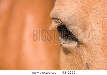 Eye Of The Horse.