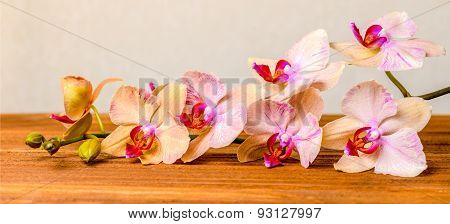Beautiful Composition Of Blooming Twig Orchid Flower, Phalaenopsis On Wooden Background, Panorama