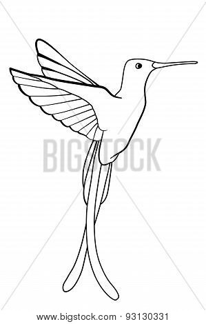 Hand Drawn Hummingbird Isolated On White Background