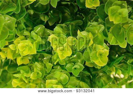 Beautiful Artificial Green Leave As Background Texture