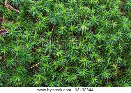 Green Moss For Texture Background