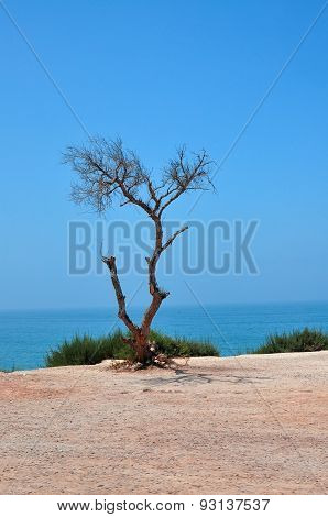 Tree At The Beach
