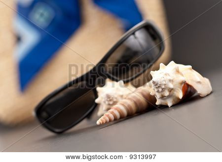 Sea Shell With Beach Assets In Shallow Dof