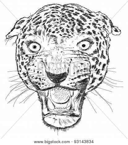 Detailed Leopard Face Vector Illustration - Handmade
