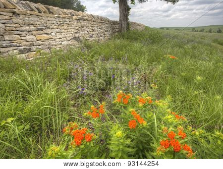 old limestone fence and butterfly milkweed