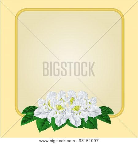 Golden Frame With White Rhododendron Vector