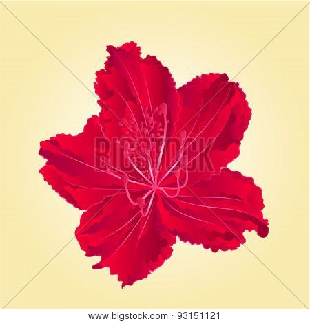 Rododenrodon Isolated Red Flower Vector