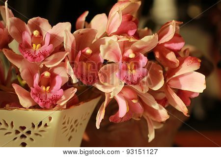 pinkish orchids in a china dish