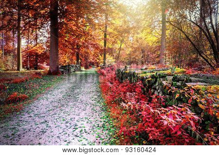 Autumn Landscape With Forest Path
