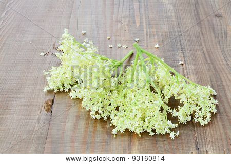Elderflower Blossoms Medicinal Plant