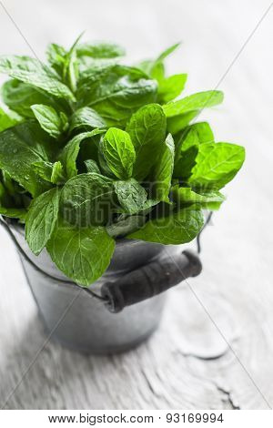 Fresh Mint In Vintage Bucket On A Light Wooden Background