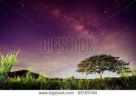 Big Tree Under Milky Way