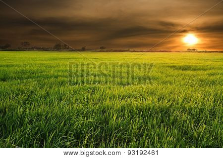 Rice Field Green Grass Blue Sky Cloud Cloudy Landscape Backgroun