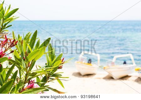 Pink Oleander Leafs, Blue Sea And Boats Summer Background
