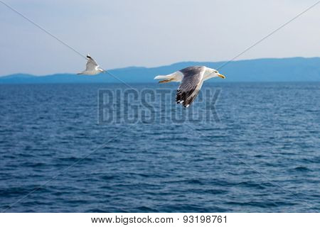 Two Seagulls Flying Low Over The Water Surface