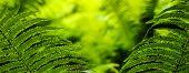 foto of fern  - Close - JPG