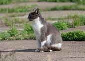 stock photo of homeless  - Homeless gray cat basking in the sun - JPG