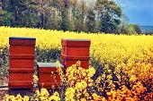 stock photo of beehive  - Summer landscape with beehives in a field with blooming flowers - JPG