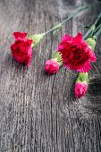pic of carnation  - fresh pink carnations on wooden background. Selective focus. ** Note: Soft Focus at 100%, best at smaller sizes - JPG