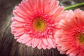 stock photo of gerbera daisy  - Pink daisy gerbera flowers on wooden background - JPG
