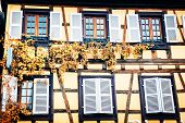 image of timber  - Details of traditional timber frame house with grapevine - JPG