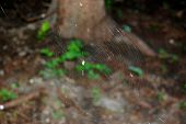 image of spider web  - Spider web and spiders victim in his web - JPG