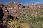 stock photo of pipe organ  - Organ Pipe Cactus National Monument is a U - JPG