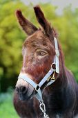 stock photo of wild donkey  - Beautiful portrait of a donkey photographed close up - JPG