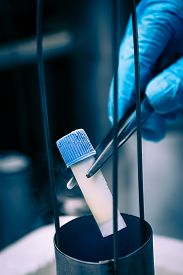 stock photo of cell  - Gloved hand hold the tube with cell suspension for cryopreservation - JPG