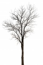 stock photo of dead plant  - Old And Dead Tree Isolated On White Background - JPG