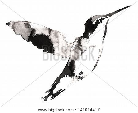 black and white painting with water and ink draw hummingbird illustration