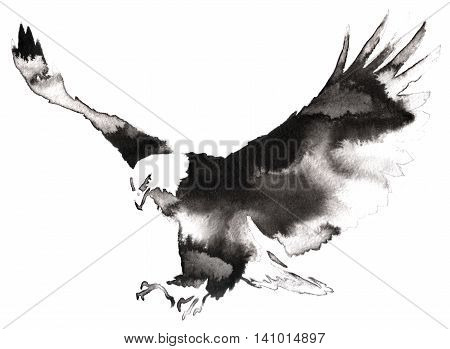 black and white painting with water and ink draw eagle bird illustration