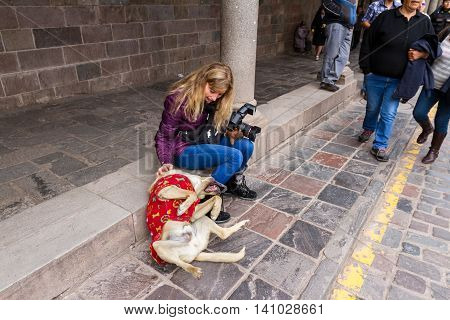 Cusco Peru - May 12 : Woman tourist petting a friendly dog in the sidewalk the dog is rolling and loving the attention. May 12 2016 Cusco Peru.