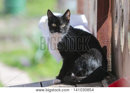 Black cat on a sunny day is closely watching